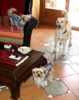 Ten tanier je pre mňa ?