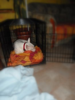 Keď som unavený najlepšie si oddýchnem v mojom domčeku