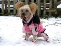 Oblečená Chantallka v snehu zaujala redaktorov denníka
