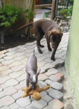 Haloo, naháč HUGO neber mi hračku, ja ťa vidím !!!!!