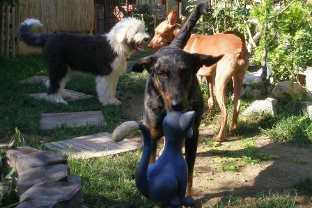 rozumiem si s inými psíkmi