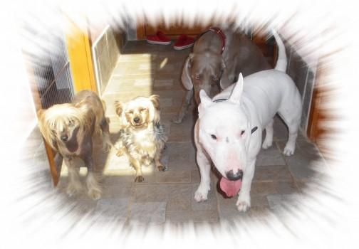 Miluje kamarátov, či už psích alebo ľudských....malých či veľkých....