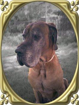 AMOR, nemecká doga