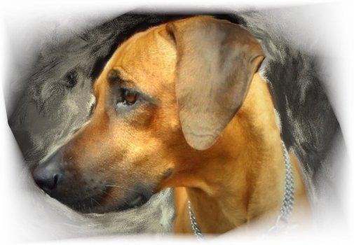 Arco je neskutočne citlivé a vnímavé zvieratko