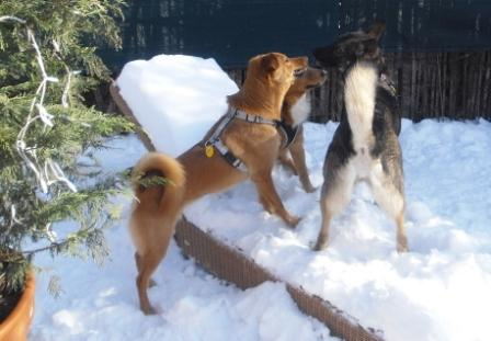 poblbneme na lehátku....slniečko síce svieti ale snehu je ešte veľa a tak.....