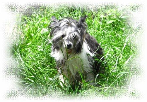 Quiny k nám prišla ako ustráchané psie dievčatko, ktoré nevie čo ju čaká