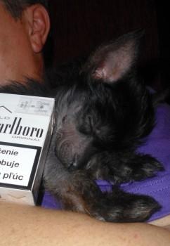 Veľké cigarety alebo malý pes ?