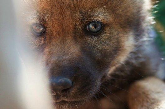 Toto sú  teda oči pravého vlka