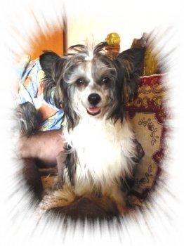 Sme veľmi radi, že sme na jej tvári vylúdili šťastný úsmev veselého psíčaťa